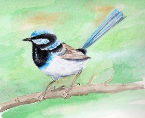 Small bird - blue wren diagrams